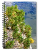 Pine Needles Over Water Spiral Notebook