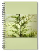 Pine Shower Spiral Notebook