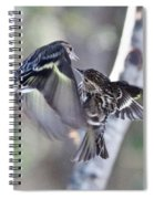 Pine Siskins Fighting 6829 Spiral Notebook