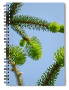 Pine Tree Branches Art Prints Blue Sky Botanical Baslee Troutman Spiral Notebook