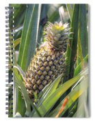 pineapple plantation in Kerala - India Spiral Notebook