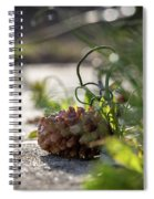 Pinecones And Wild Onions  Spiral Notebook