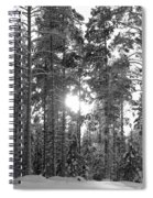 Pines 3 Spiral Notebook