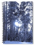 Pines 4 Spiral Notebook