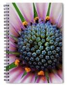 Pink African Daisy Detail Spiral Notebook