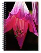 Pink Aglow Spiral Notebook