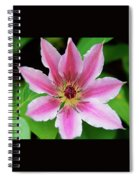Pink And White Clematis Spiral Notebook