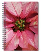 Pink And White Poinsettia Spiral Notebook