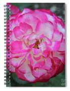 Pink And White Rose Square Spiral Notebook