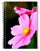 Pink And Yellow Cosmo Spiral Notebook