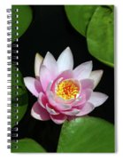 Pink And Yellow Lotus Waterlily Spiral Notebook