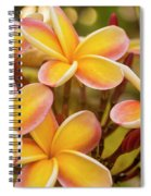 Pink And Yellow Plumeria 2 Spiral Notebook