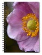 Pink Anemone Spiral Notebook