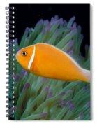 Pink Anemonefish Spiral Notebook