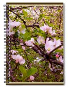 Pink Aplle Blossoms Of Spring Time Spiral Notebook