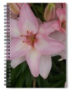 Pink Asiatic Lilies 1 Spiral Notebook