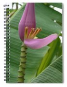Pink Banana Flower Spiral Notebook