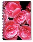 Pink Begonias Spiral Notebook