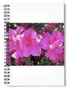 Pink Bevy Of Beauties Spiral Notebook