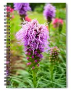 Purple Blazing Star 01 Spiral Notebook