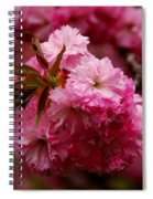Pink Blooms Spiral Notebook