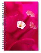 Pink Bougainvillaea Spiral Notebook
