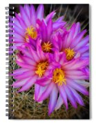 Pink Cactus Flowers Square  Spiral Notebook