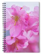 Pink Cherry Blossom Cluster Spiral Notebook