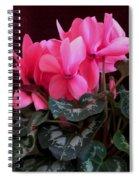 Pink Cyclamen 1 Spiral Notebook