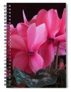 Pink Cyclamen  Spiral Notebook