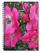 Pink Climbing Roses - Digitally Enhanced Spiral Notebook