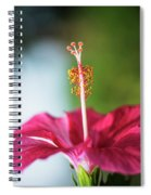 Pink Colored Hibiscus Closeup Image Spiral Notebook
