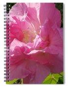 Pink Confederate Rose Spiral Notebook