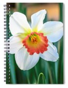Pink Cup Solo Daffodil Spiral Notebook