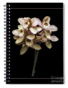 Pink Cymbidium Orchid Spiral Notebook
