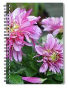 Pink Dahlia Flowers Spiral Notebook