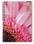 Pink Daisy Close-up Spiral Notebook