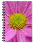 Pink Daisy With Raindrops Spiral Notebook