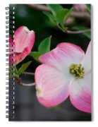 Pink Dogwood In The Morning Light Spiral Notebook