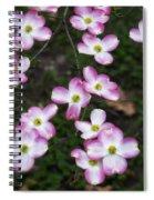 Pink Dogwood Mo Bot Garden Dsc01756 Spiral Notebook