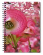 Pink Dogwood Tree Flowers Dogwood Flowers Giclee Art Prints Baslee Troutman Spiral Notebook
