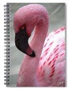 Pink Flamingo Profile Spiral Notebook