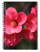 Pink Flowering Quince Spiral Notebook