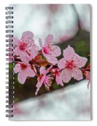 Pink Flowering Tree - Crabapple With Drops Spiral Notebook