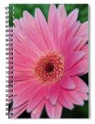 Pink Gerbera Delight Spiral Notebook