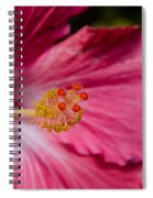 Pink Hibiscus Close-up Spiral Notebook