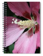 Pink Hibiscus Cose -up Spiral Notebook