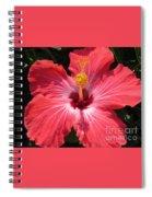 Pink Hibiscus Spiral Notebook