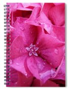 Pink Hydrangea After Rain Spiral Notebook