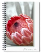 Pink Ice Protea Spiral Notebook